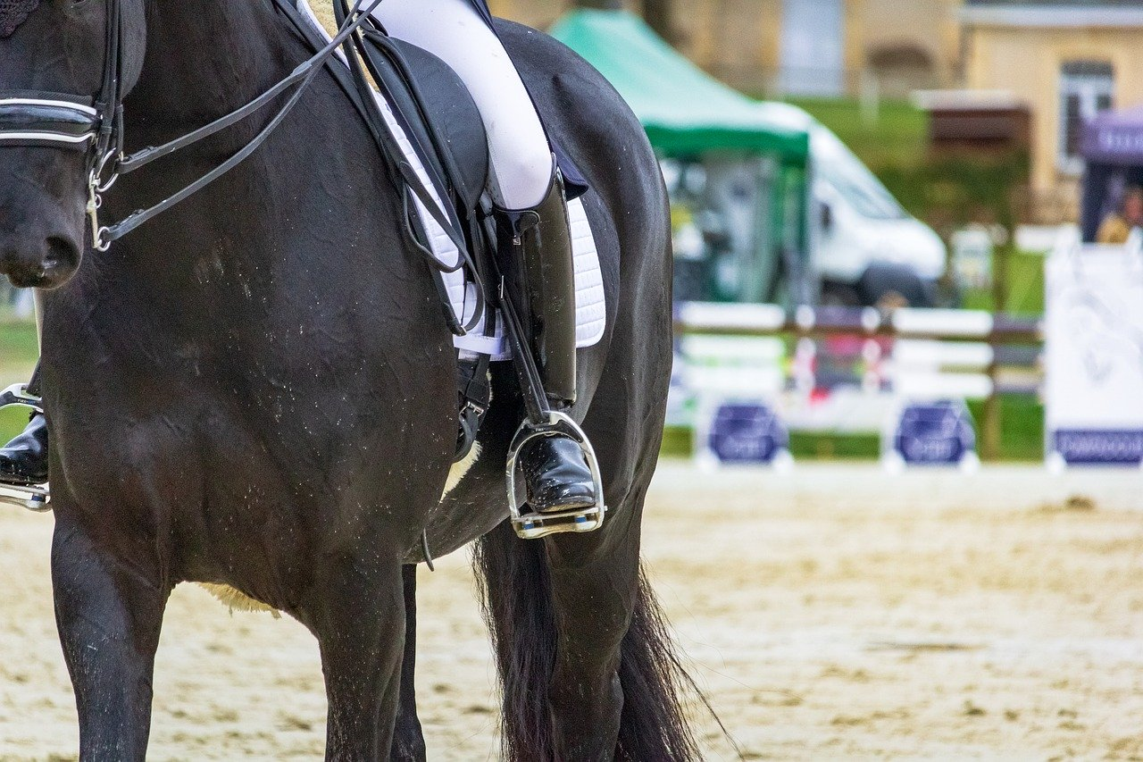riviera horses a san giovanni in marignano